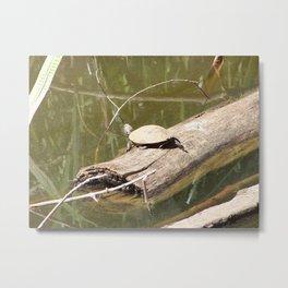 Turtley Metal Print