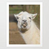 llama Art Prints featuring Llama  by Rob Hawkins Photography