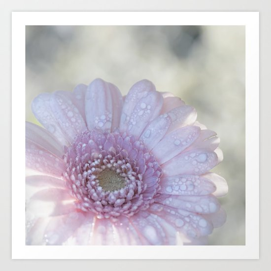Pink Daisy with Waterdroplets in Backlight- Flower- Flowers- Floral Art Print
