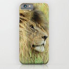 Leo Panthera African lion iPhone Case