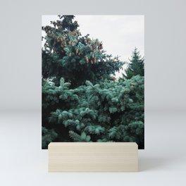Spruce tree 3 Mini Art Print