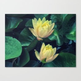 Yellow Lotus Flowers Canvas Print