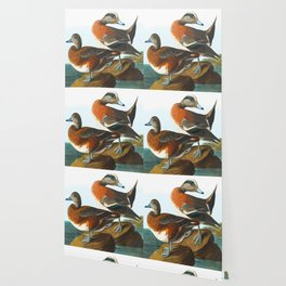 American Wigeon Audubon Birds Vintage Scientific Hand Drawn Illustration Wallpaper
