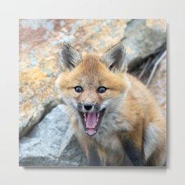 Watercolor Fox, Red Fox 03, Union Reservoir, Boulder Metal Print