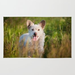 Single white stray tyke dog at the meadow Rug