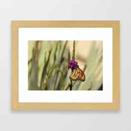 Monarch Butterfly in the City Framed Art Print