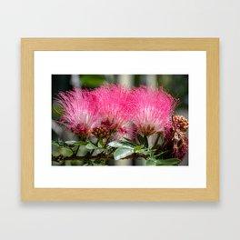 Pink Flower Burst Framed Art Print