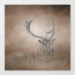 In Plain Sight - Sika Deer - Wildlife Canvas Print