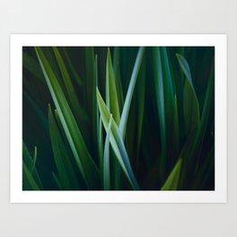 Close Up Of Dark Green Grass Sensual Nature Pattern Art Print