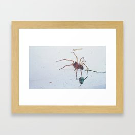 House spider heading out Framed Art Print