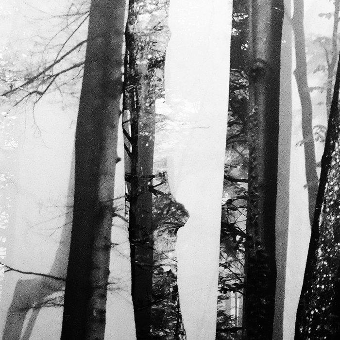 Forest III Leggings