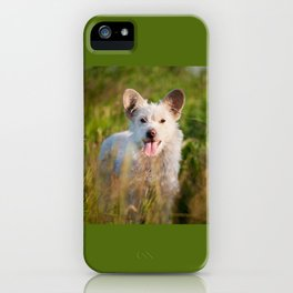 Single white stray tyke dog at the meadow iPhone Case