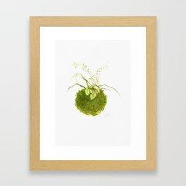 Kokedama 1 Framed Art Print