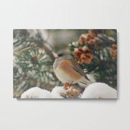 Chilly Bird Metal Print