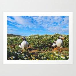 Grasslands Camomiles Sky Art Print