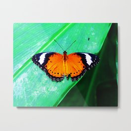 Orange Lacewing Butterfly Metal Print
