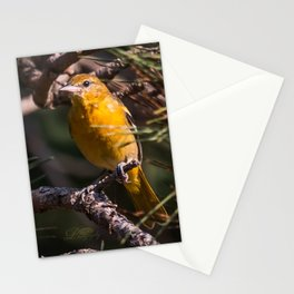 Morning Oriole Stationery Cards