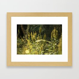 Mountain Meadows 01 Framed Art Print