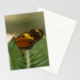 Perched Tiger Longwing Butterfly Stationery Cards