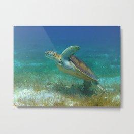 Turtle taking flight Metal Print