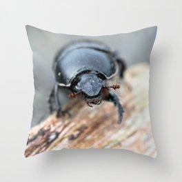 Close-up of a Dor / Dumbledore Dung Beetle Throw Pillow