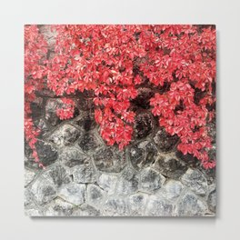 Pink red ivy leaves autumn stone wall Metal Print