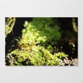 Under it all Canvas Print
