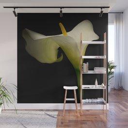 Classic Calla Lily Wall Mural