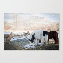 mini horses and a view Canvas Print