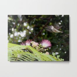 Happy hummer! Metal Print