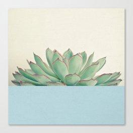 Succulent Dip III Canvas Print