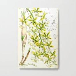 A orchid plant - Vintage illustration Metal Print