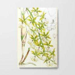 A orchid plant - Vintage illustration Metal Print