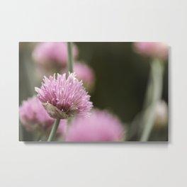 Chives - Floral Art Metal Print