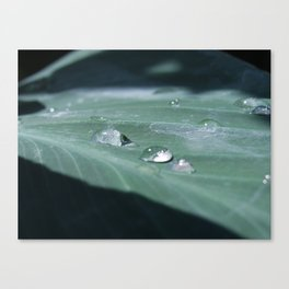 water droplet reflections Canvas Print