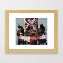 California Sea Lions Framed Art Print