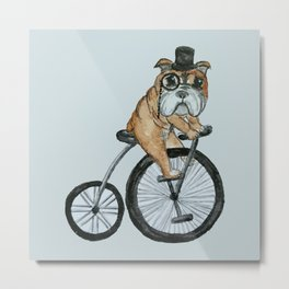 English Bulldog Riding a Penny-farthing Metal Print