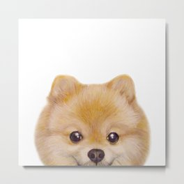 Pomeranian Dog illustration original painting print Metal Print