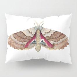Big Poplar Sphix Pillow Sham