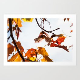 Autumn Sonata I Art Print