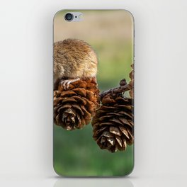 Mousey iPhone Skin
