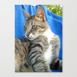 Tabby Cat Against Blue Cloth Background Canvas Print