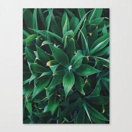 Pattern Plant Canvas Print