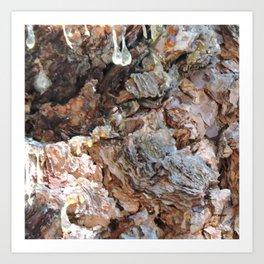 TEXTURES: Weeping Big Cone Pine Bark Art Print
