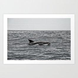 Voir les dauphins Art Print