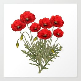 Flanders Red Poppy Art Print