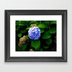 Blue Flower (Edited) Framed Art Print