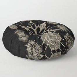 """Spumellaria"" from ""Art Forms of Nature"" by Ernst Haeckel Floor Pillow"