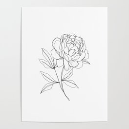 Botanical illustration line drawing - Peony Poster