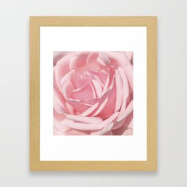 Landscape Summer Rose Framed Art Print